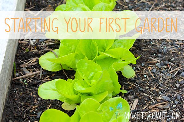 Starting Your First Vegetable Garden