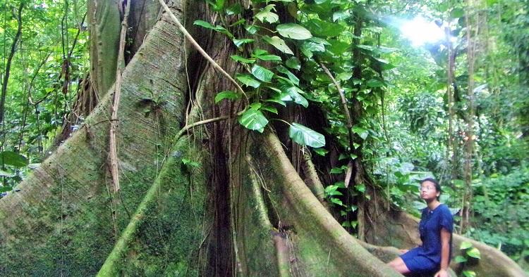 Forêt tropicale et chocolat : le meilleur des deux mondes à l'Habitation Céron