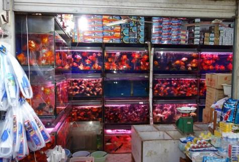 GoldfishPetMarket