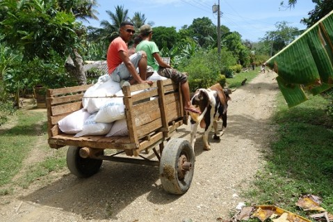 Ox and Cart in Baracoa