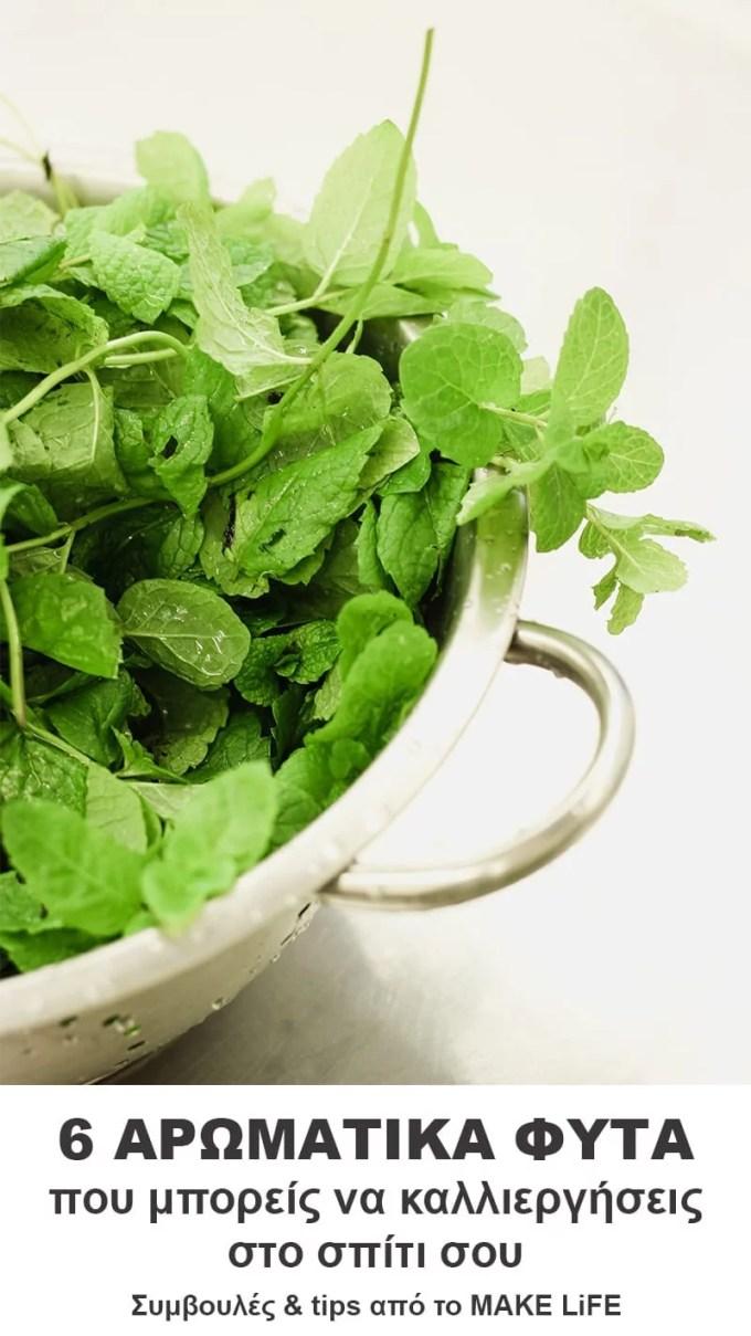 herbs you can plant in your pots - Αρωματικά φυτά από τη γλάστρα στο πιάτο σας