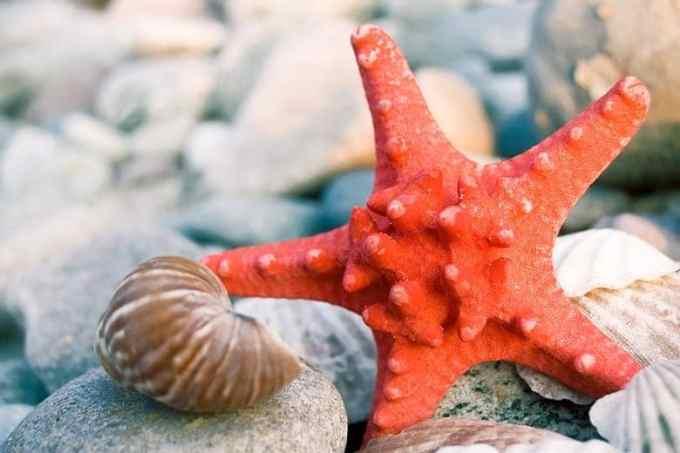 Αστερίας Πορτοκαλί Θάλασσα Φόντο