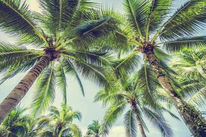 Εξωτικό Καλοκαίρι