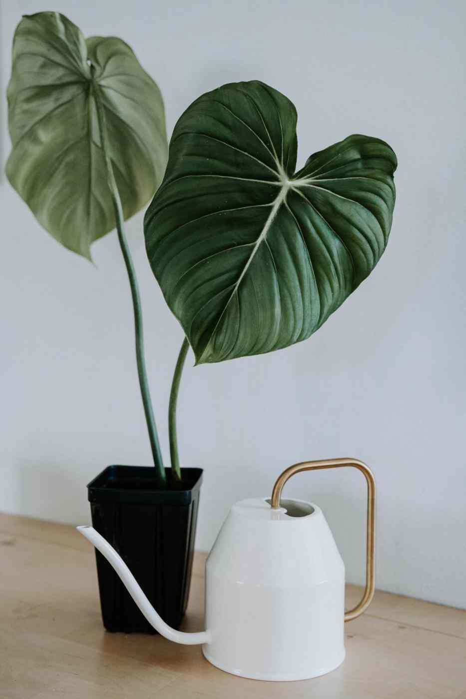 Gießkanne und Pflanzen