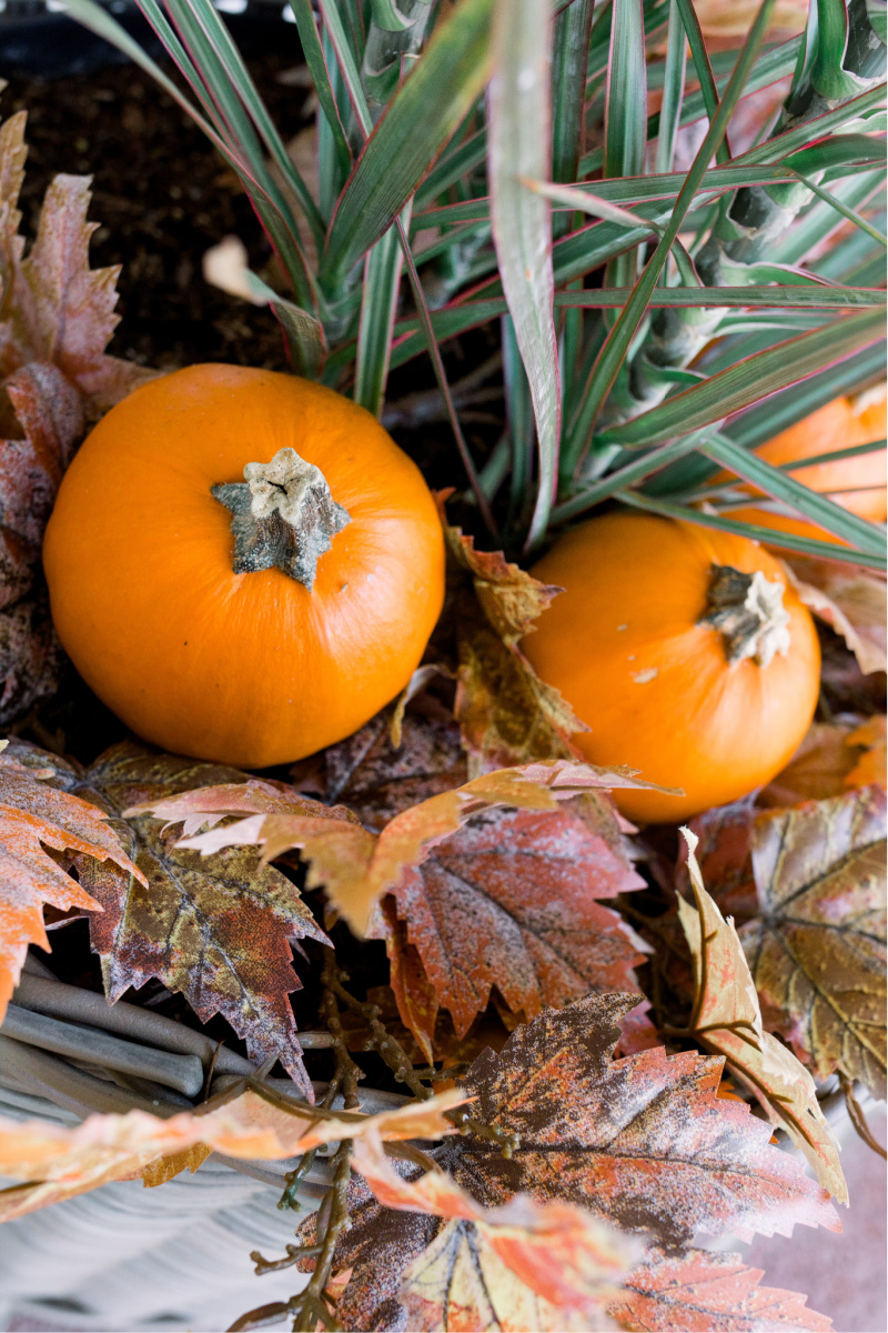 Pumpkins in Planter