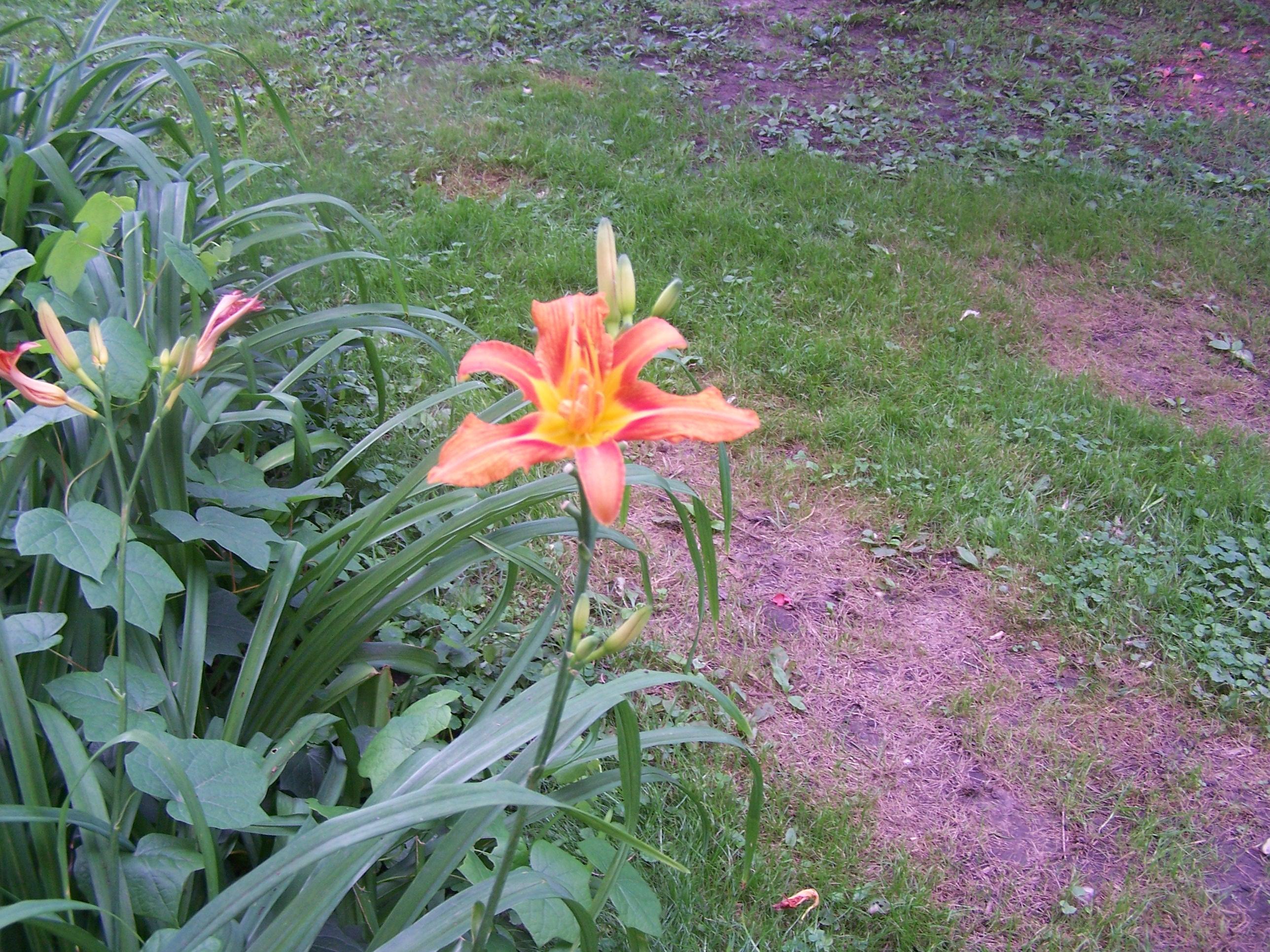Flowers, Gilligan, Muddy Dogs 012