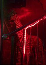 Photograph Andrea Stultiens Neon Zebra