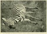 Example from book 'Uganda Protectorate', 1902