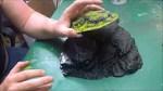 VIDEO: Lukes Apes – painting 3D Terrain