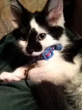 3 Ways Kittens Are Like Human Babies (6/6)