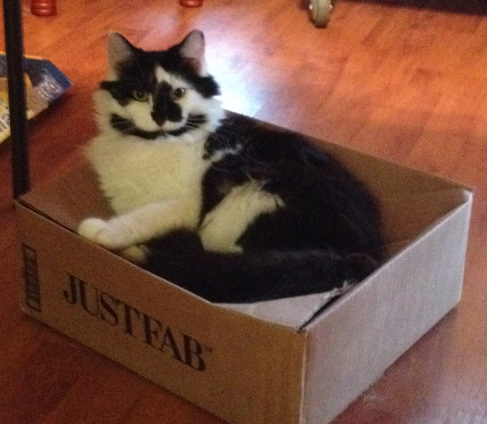 Flat Packs and Cat Tales (1/3)