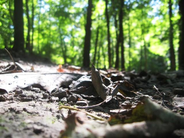 leaves on the ground |Make Something Mondays