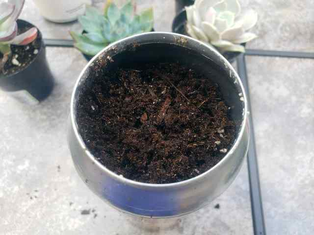 succulent soil in beer can container