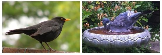 Day 30: Birdsong and birdsplash