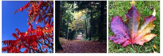 Day 76: Appreciating autumn