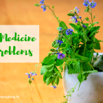 Ayurvedic Medicine for Skin Problems