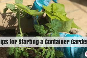 easy container garden tips