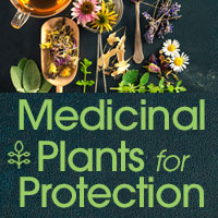 herbalmedicinehealth_intro_facebook