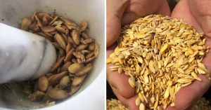 How One Tablespoon of Crushed Melon Seeds Can Treat E. Coli