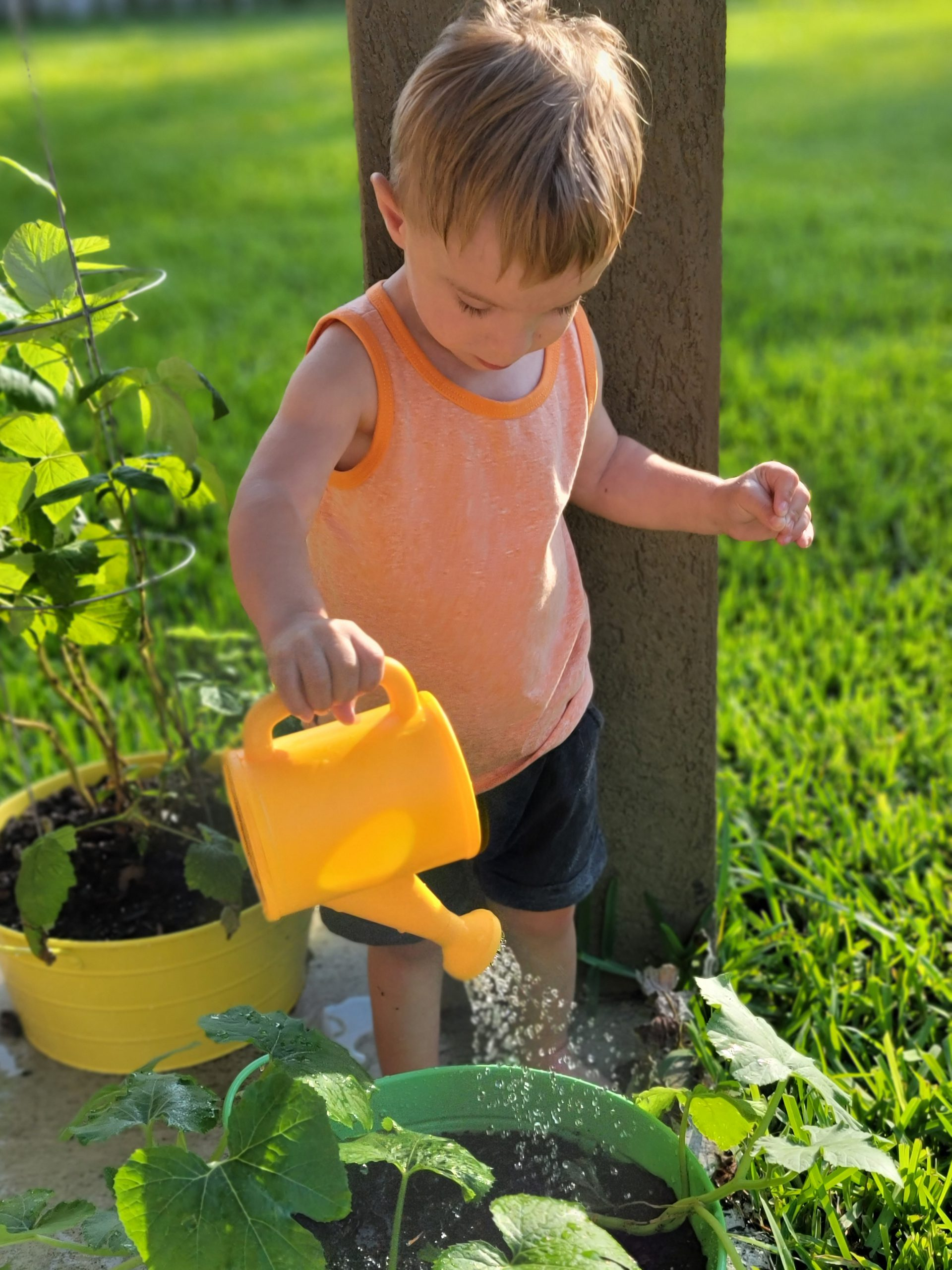 Growth and Gardening
