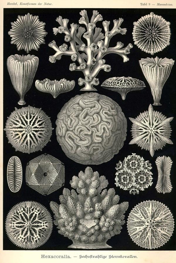 Kunst-Formen der Natur, by Ernst Haeckel (Art forms in nature)