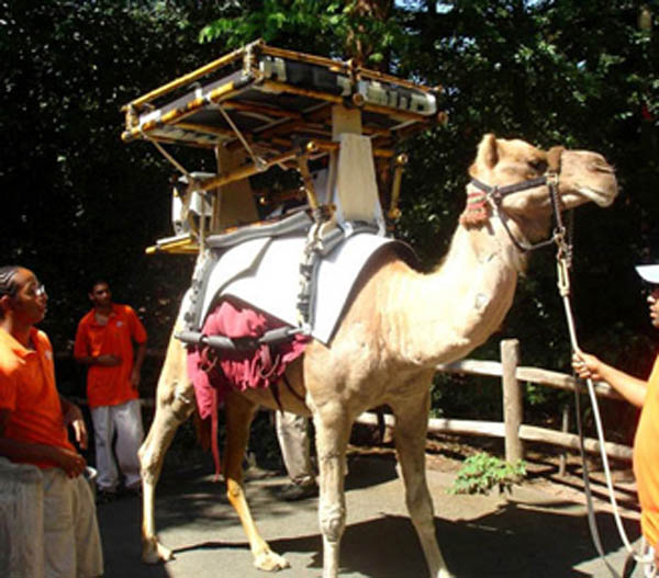 Solar-powered camels