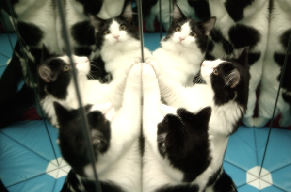 Cat-leidoscope