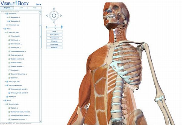 Think Anatomy learning site