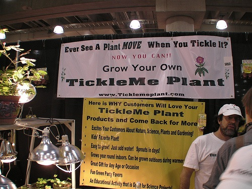 Ticklish plants
