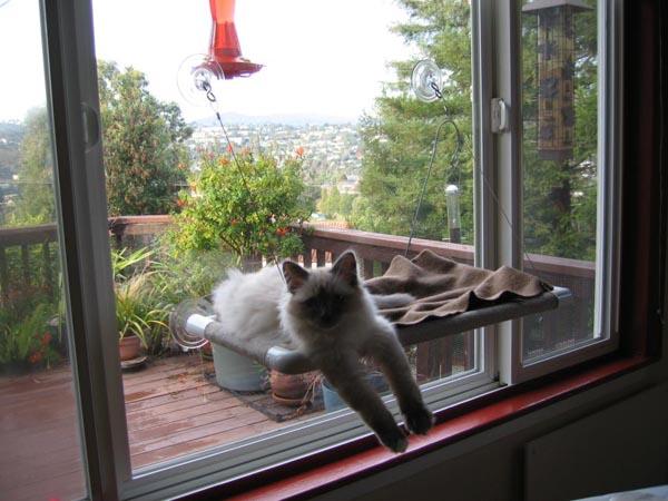 Kitty cot, window cat perch