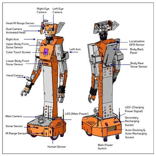 Hawk full-sized humanoid robot