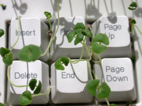 Chia keyboard