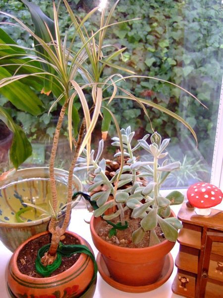 How-To: Create a Simple Houseplant Wicking System