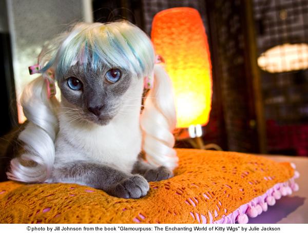 Pet Spotlight: Julie Jackson's Siamese Cat Boone