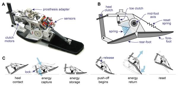 Bionic feet becoming reality