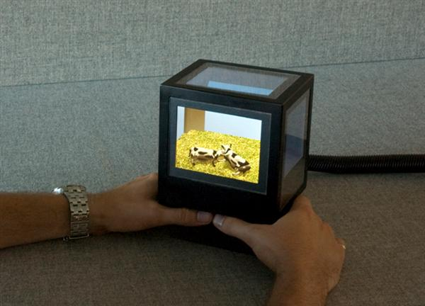 "Virtual 3D ""fish tank"" box has screens all around"