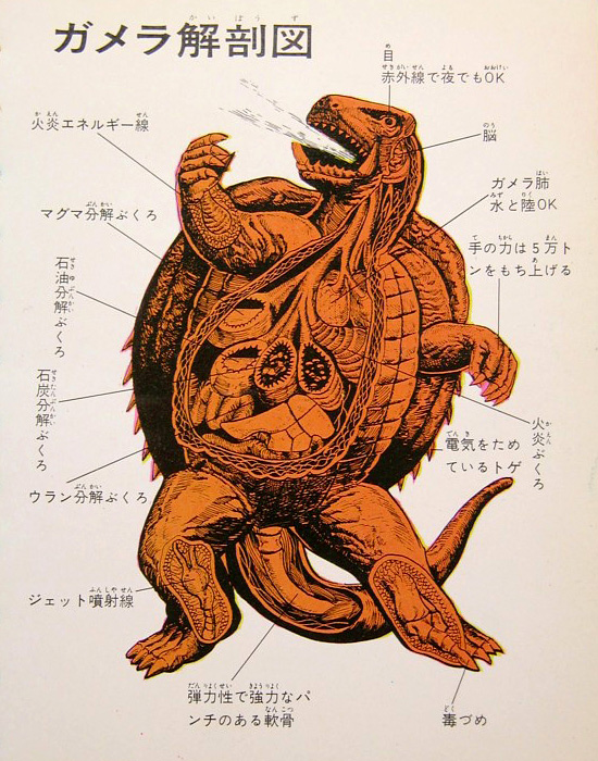Kaiju anatomical drawings