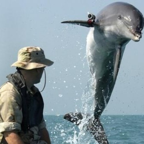 News From The Future: Dolphins Soldiers