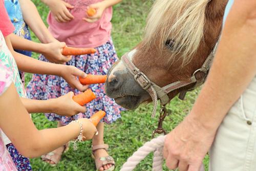 Children's Birthday Party at an Organic Farm