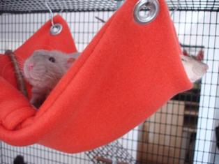 How-To: Pocket Pet Hammock