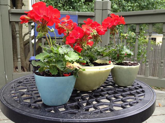 DIY Garden Container Tips