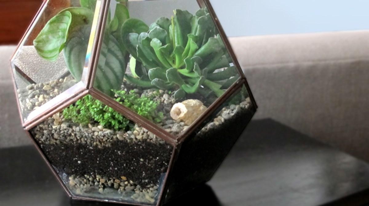 Diy Succulent Terrarium Make
