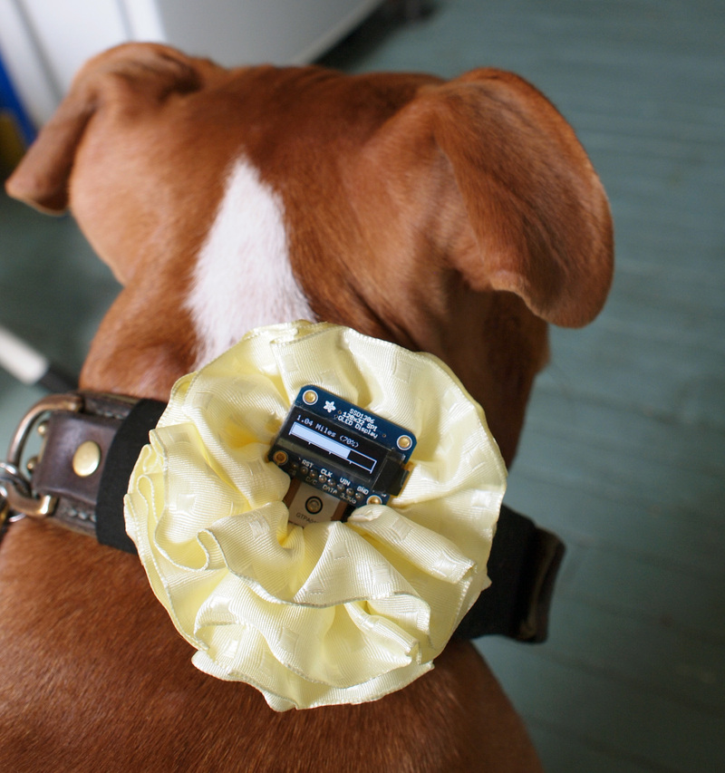 GPS-Based Puppy Pedometer