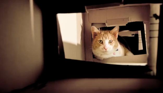 How-To: DIY Cat Maze