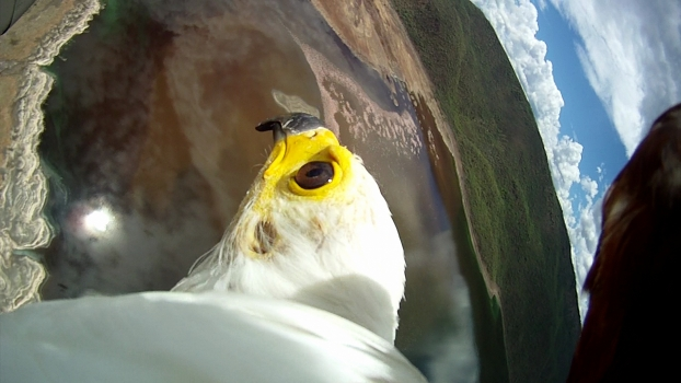 Bird-Mounted Cameras