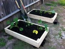 2x4 Planter Boxes