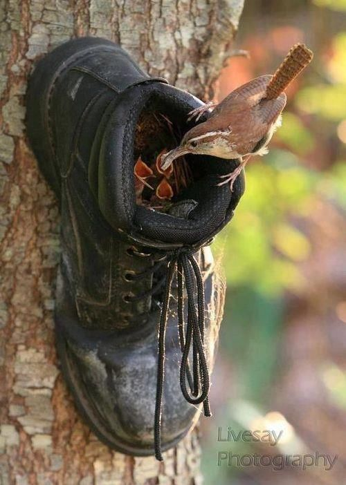 DIY Boot Birdhouse