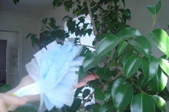 How-To: Clean a Large Houseplant