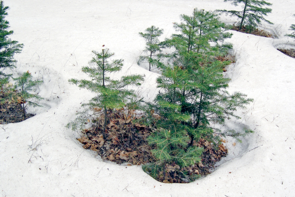 Country Scientist — Snow Science