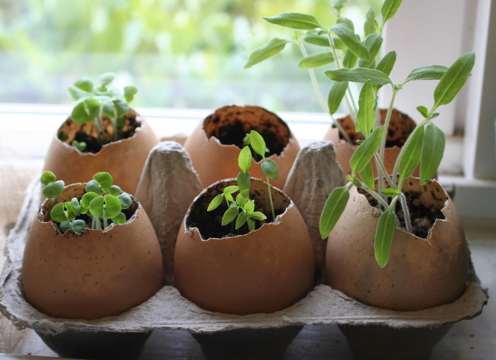 How-To: Egg Shell Planters